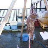 茨城・大洗にある「磯料理 山水」であんこう鍋を食べた